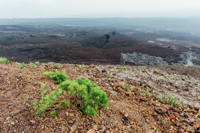 Galapagos - Sierra Negra Volcano (67 of 72) June 15