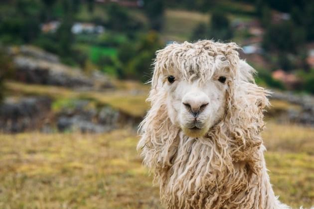 Saksaywaman Cusco Peru -36- July 2015