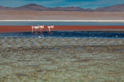 Salar de Uyuni - Bolivia -113- July 2015