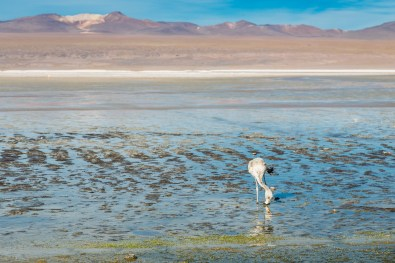 Salar de Uyuni - Bolivia -121- July 2015