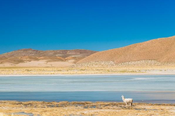 Salar de Uyuni - Bolivia -149- July 2015