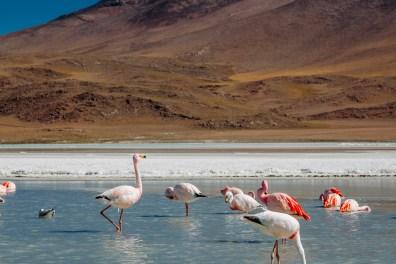Salar de Uyuni - Bolivia -85- July 2015