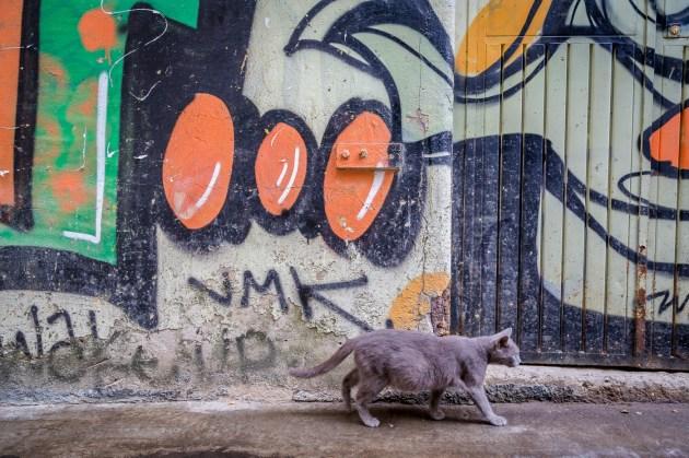Istanbul Turkey Photography -115