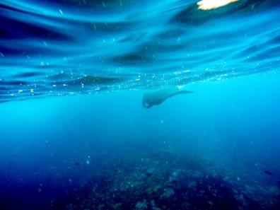 Nusa Lembongan Snorkeling