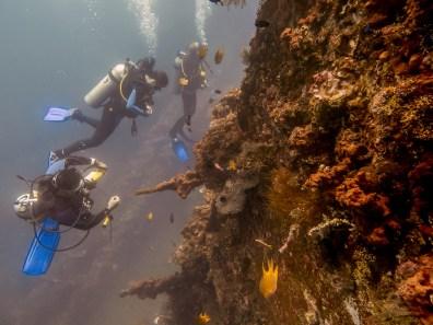USAT Liberty Wreck Tulamben, Bali