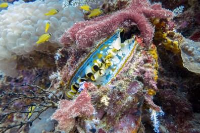 Koh Haa - Koh Lanta Diving -117