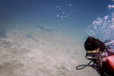 Our brief encounter with a shark at Koh Haa