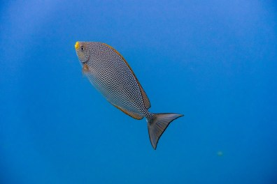 Similan Islands Live Aboard with Wicked Diving -124