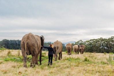 Elephant Park Knysna -10