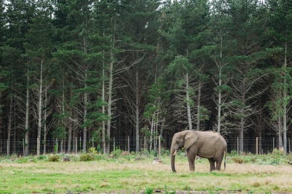 Visiting the elephant park in Knysna