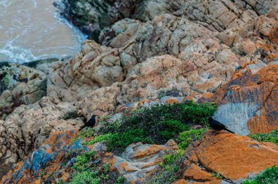 Robberg Nature Reserve Park South Africa -36