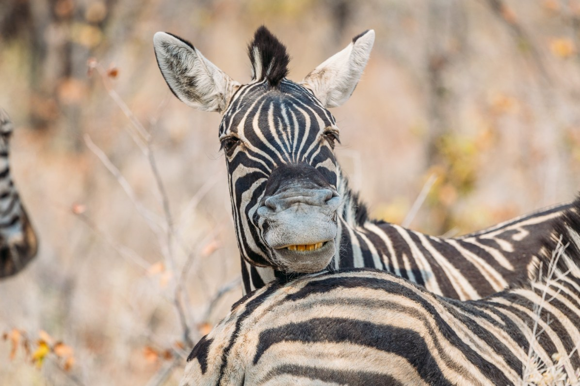 Say hello to the zebras of Etosha National Park in Namibia on our self drive safari
