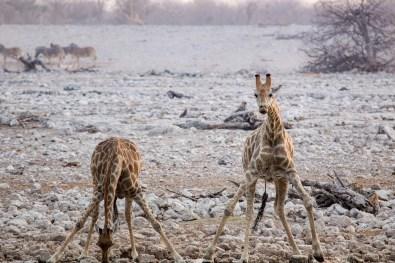 Etosha Game Reserve Self Drive Namibia -199