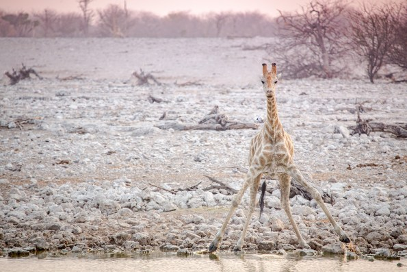 Etosha Game Reserve Self Drive Namibia -204