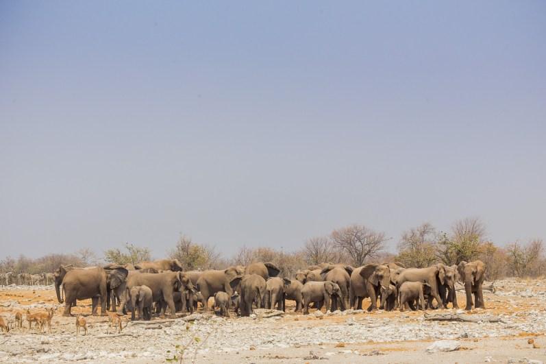 Etosha Game Reserve Self Drive Namibia -85