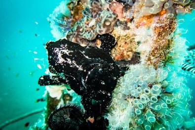 Dauin Philippines Muck Diving Site Photos -13