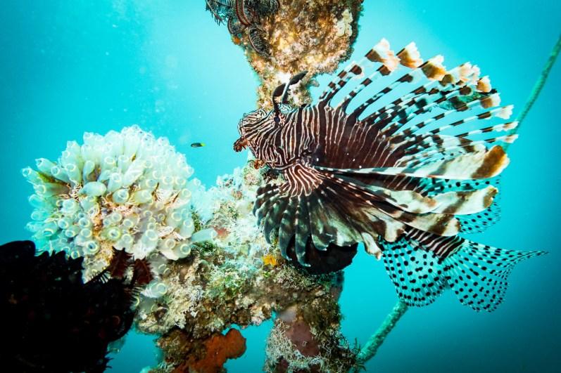 Dauin Philippines Muck Diving Site Photos -18