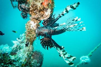 Dauin Philippines Muck Diving Site Photos -19