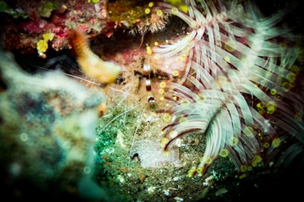 Dauin Philippines Muck Diving Site Photos -22