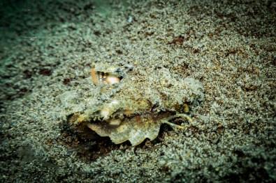 Dauin Philippines Muck Diving Site Photos -40