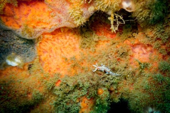 Dauin Philippines Muck Diving Site Photos -5