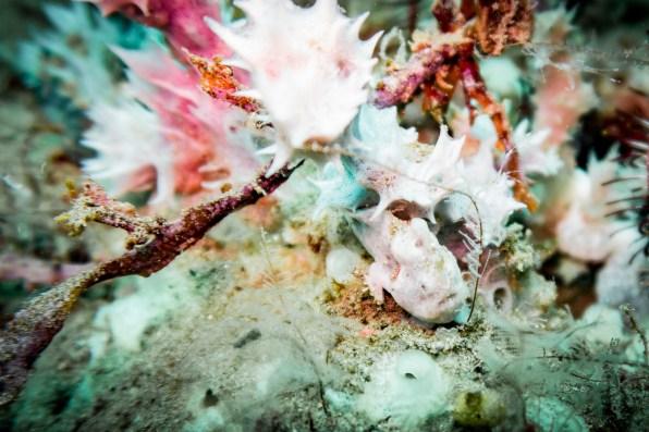 Dauin Philippines Muck Diving Site Photos -52