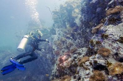 Koh Tao Scuba Diving Site South West Pinnacle -26