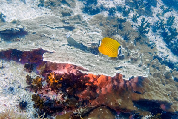Koh Tao Scuba Diving Site South West Pinnacle -32