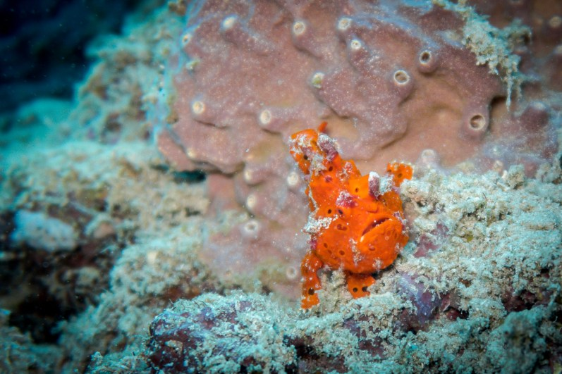 Moalboal Philippines Scuba Diving -123