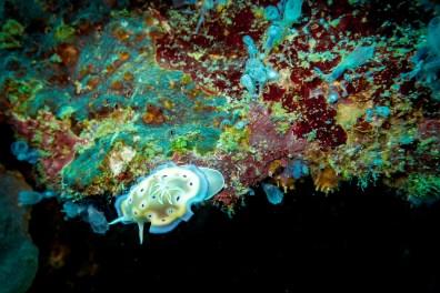 Apo Island Philipines Scuba Diving -17