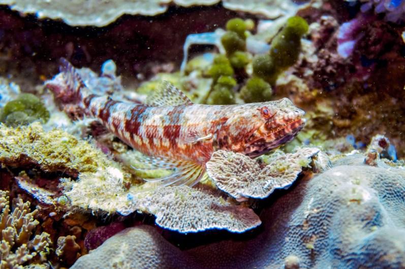 Apo Island Philipines Scuba Diving -21
