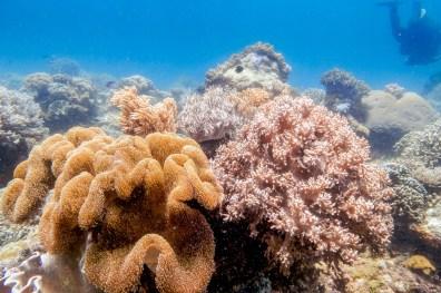 Apo Island Philipines Scuba Diving -44