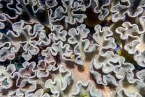 Apo Island Philipines Scuba Diving -50