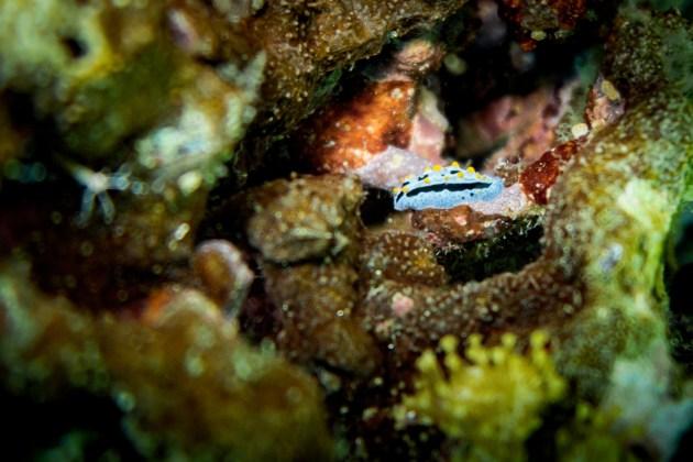 Apo Island Philipines Scuba Diving -55