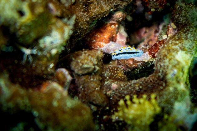 Apo Island Philipines Scuba Diving -55
