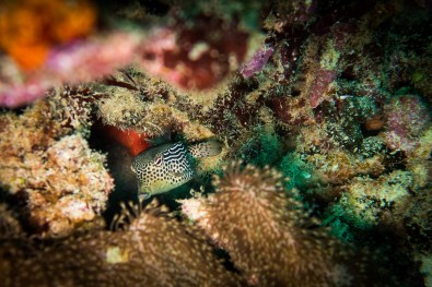 Apo Island Philipines Scuba Diving -69