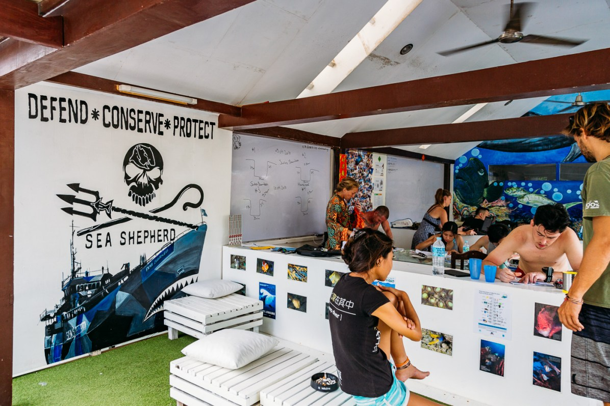 Sierra Madre Divers Sea Turtle AWARE Specialty Identification Course