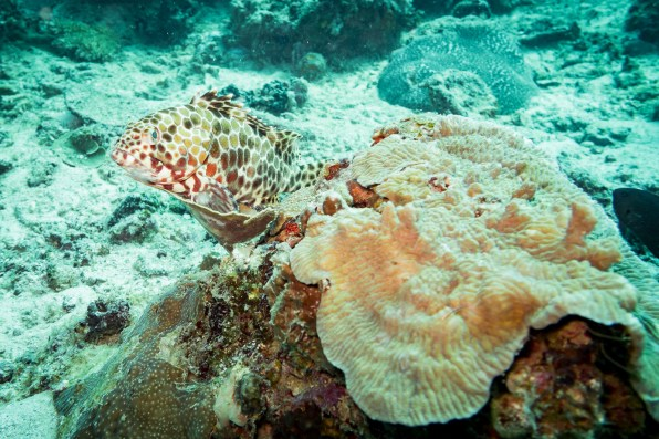 El Nido Scuba Diving -50