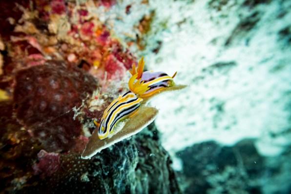 El Nido Scuba Diving -57
