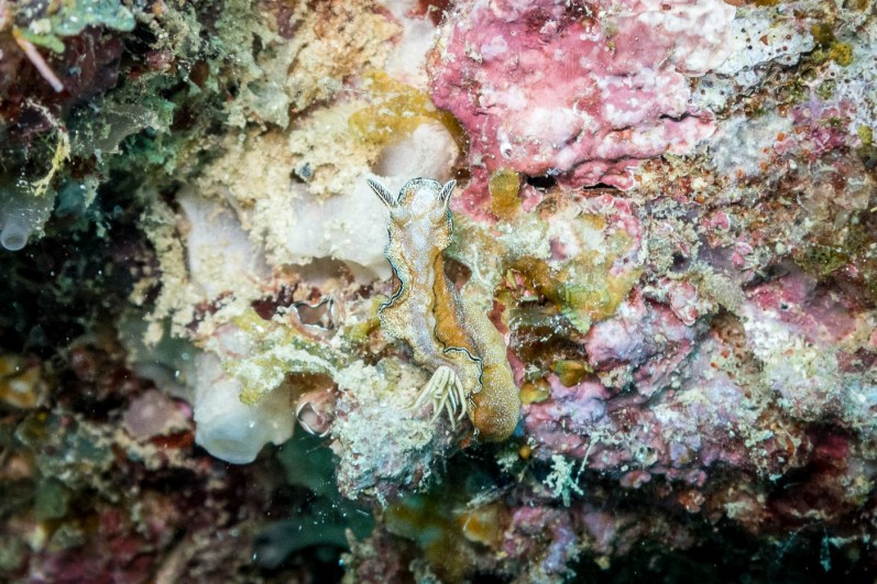 El Nido Scuba Diving -89