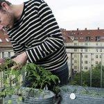 Tips Og Tricks Til At Dyrke Altanen Som En Kokkenhave Eller Blomsterhave