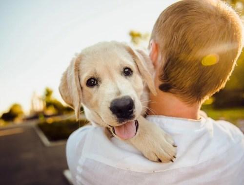 i cani migliorano la vita