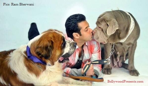 Image result for salman khan dogs