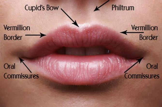 lip anatomy diagram c3 corvette wiring things to know about enhancement