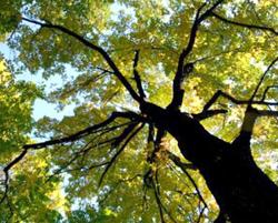 festa-alberi-15-list01