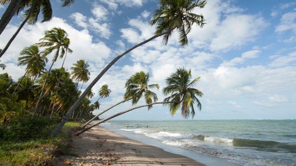 Praia do Patacho - litoral Norte de Alagoas - Costa dos Corais.