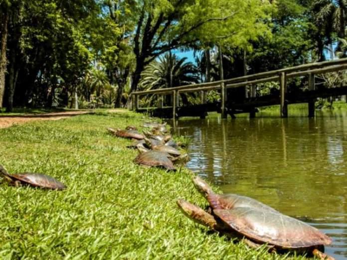 Jardim Botânico de Porto Alegre é um dos passeios em Porto Alegre