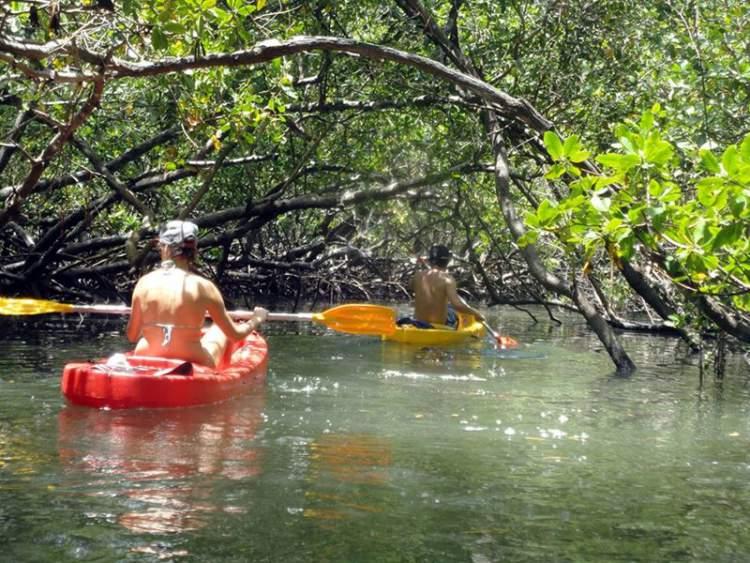 Passeio de Caiaque nos manguezais na ilha de Boipeba na Bahia