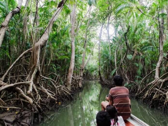 Passeios por manguezais na Ilha de Marajó