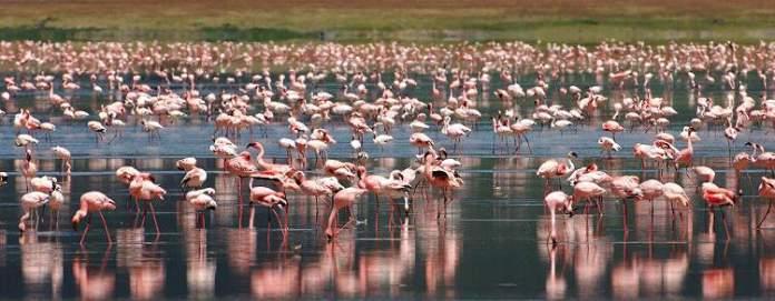 Quênia e Tanzânia é um dos melhores destinos para viajar em setembro